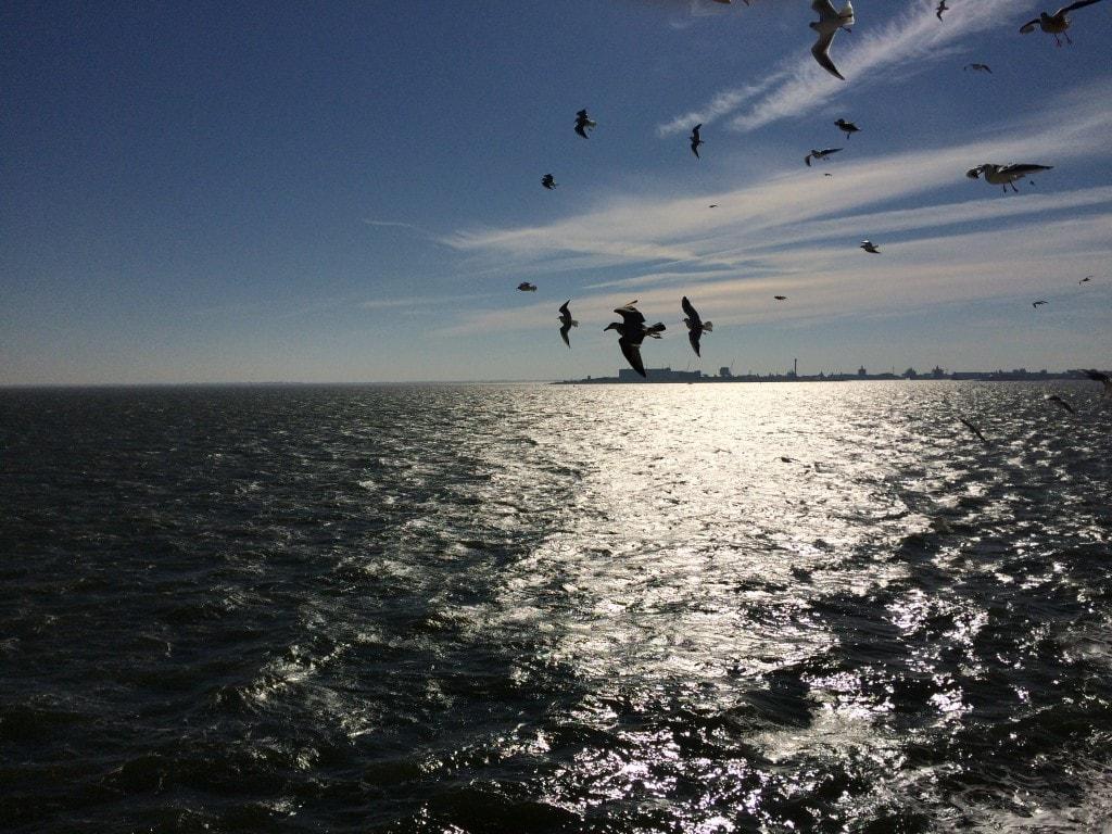 3x strandtenten op Texel